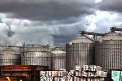 نظارت بر ترخیص ۵۰۰ هزار تن نهاده مواد اولیه خوراک دام و طیور