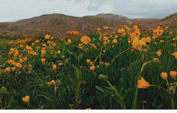 VIDEO: Beatufil nature of 'Kakan' region in Spring