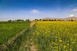 کشاورزان از کشت دوم پرهیز کنند/کاهش منابع آب سدها به نصف