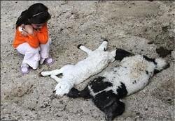 طومار رنج در شرق اصفهان / کمبود نهاده و خوراک آلوده دامداران را میآزارد