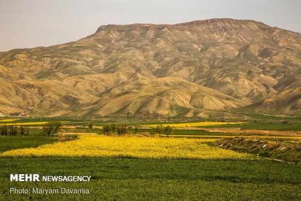 کشت دانههای روغنی و ذرت علوفهای در مغان آغاز شد
