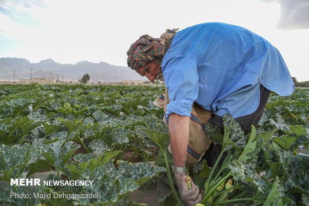 کشاورز روزه دار