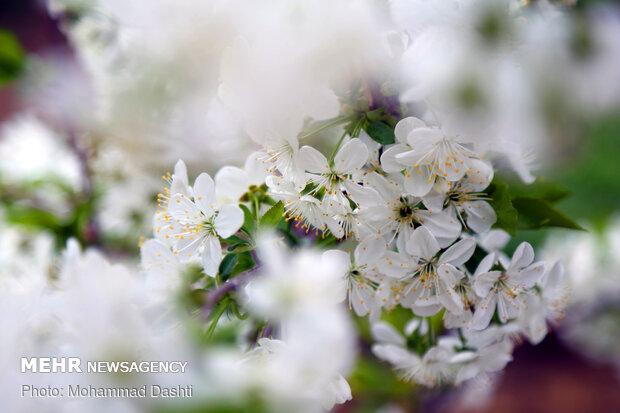 رد پای بهار در اردبیل