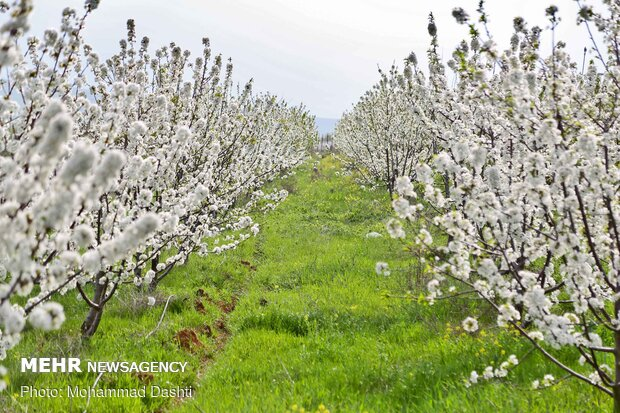 Beautiful nature of Ardabil with breathtaking views in spring