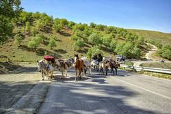 کوچ بهاره ۱۲ هزار عشایر اردبیل به ییلاقات