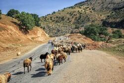 ۴۳۰۰میلیارد تومان برای مقابله با خشکسالی در مناطق عشایری نیاز است