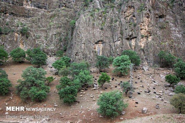 غربالگری عشایر در مبادی ورودی استان چهارمحال و بختیاری