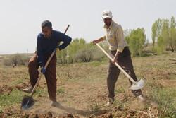 همت کشاورزان کردستانی در روزهای کرونایی