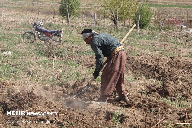جایگاه اجتماعی کشاورزان باید ارتقا یابد