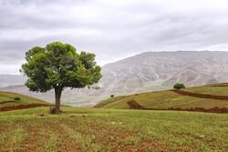 جنگلکاری اراضی مهدیشهر ۸۰ درصد پیشرفت فیزیکی دارد