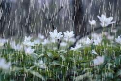 شمیرانات بیشترین بارش را در استان تهران به خود اختصاص داده است