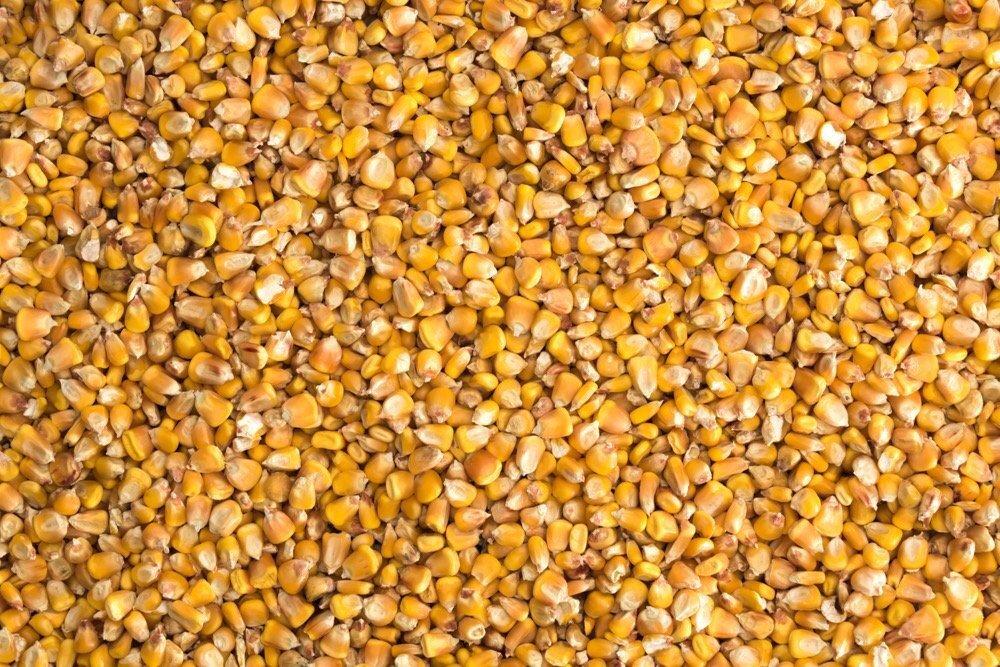 ایران ظرفیت صادرات ۲ تا ۵ هزار تن بذر ذرت را دارد