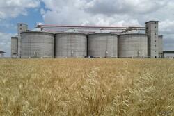 آمادگی ۶۱ مرکز برای خرید ۶۵۰ هزار تن گندم کشاورزان کرمانشاهی