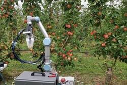 تولید رباتی که با سرعت انسان میوه می چیند