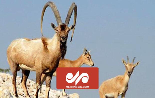 مازندران میں جنگلی حیوانات کی شاندار تصاویر