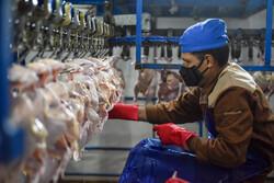 قطعه بندی مرغ توسط دلالان/ عرضه مرغ قطعه بندی خلاف قانون است