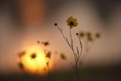 کدام آرزوها محقق می شود و چه آرزویی مردود است؟/ شرح دعای روز هفدهم ماه مبارک رمضان