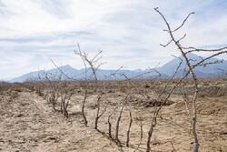 ۲۵ درصد باغات کرمانشاه در خطر خشکیدگی هستند