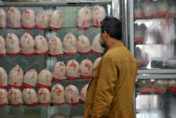کشتار روزانه ۹۰ تن مرغ در چهارمحال و بختیاری