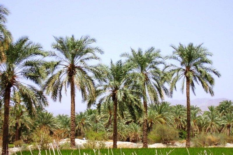 مصائب بزرگترین روستای استان بوشهر/ «دهقاید» لنگ اعتبار است