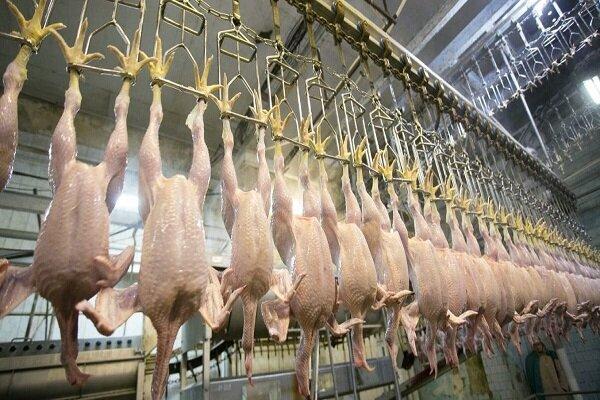 نابسامانیها در بازار مرغ اوج گرفت