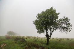 زنجانی ها هوای خنکی را تجربه می کنند/بارش باران