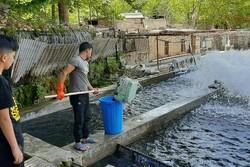 موانع پیشرو پرورش ماهی در خراسان شمالی/ نهادهها گران هستند