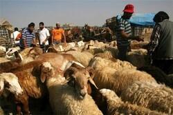 امهال وام دامداران کرمانشاهی، راهی برای جلوگیری از قاچاق