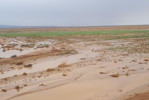 خسارت ۷۰ میلیارد ریالی سیل به مزارع کشاورزی جاجرم