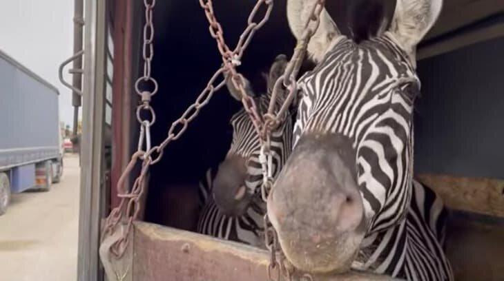 قاچاق قانونی حیات وحش در لوای نظارتهای آبکی