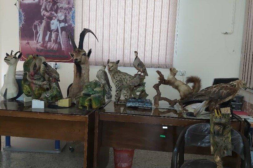 کشف و ضبط تاکسیدرمی ۱۲ گونه جانوری در خرمآباد