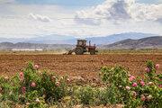İran'ın Kuzey Horasan eyaletinde çiçek hasadı başladı