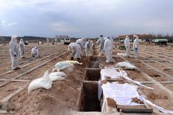 مرگ ۵۷ نفر بر اثر کرونا در اردبیل/۵۰۵ نفر راهی بیمارستان شدند