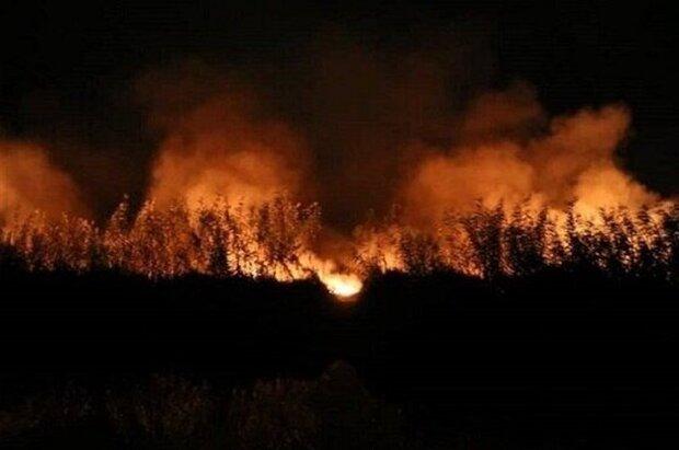 آتشسوزی در نیزارهای ورودی شهر بوشهر مهار شد