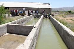 رهاسازی ۱۰۰ هزار قطعه ماهی در استخرهای  آب کشاورزی آذربایجان غربی