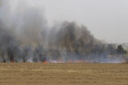 More details emerge about fire near Haifa