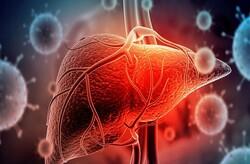 تولید شبهبافت کبدی از سلولهای بنیادی پرتوان انسانی