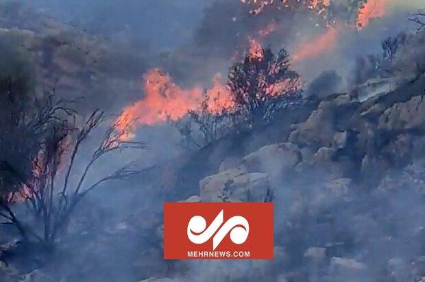 جدال نابرابر با آتش در ارتفاعات دشتستان