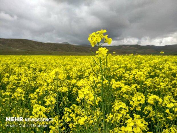 Breathtaking scenery of spring in Owryad Village