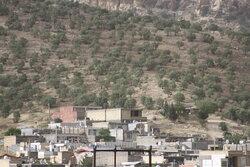 بحران «کوهخواری» در ایلام/ جنگلهای بلوط دود شدند