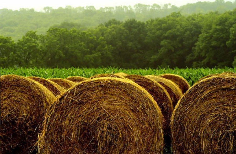تولید سالانه ۲۲ میلیون تن محصولات علوفهای در کشور