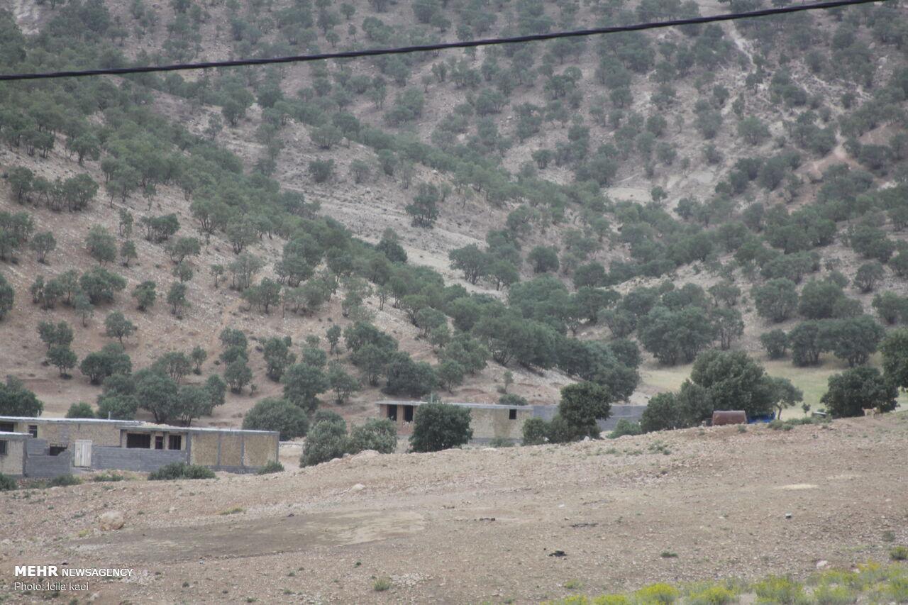 بحران «کوه خواری» در ایلام/ جنگلهای بلوط مسکن شدند
