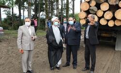 دستور رئیس کل دادگستری گیلان برای توقف برداشت چوب از جنگل ها