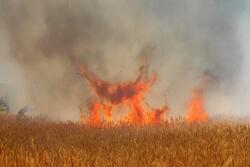 آتش سوزی در باغات روستاهای اردستان / افزایش دما عامل آتش سوزی است