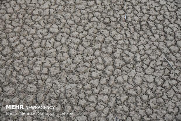 زمین حاصل خیز سفید دشت تشنه قطره ای آب می باشد.