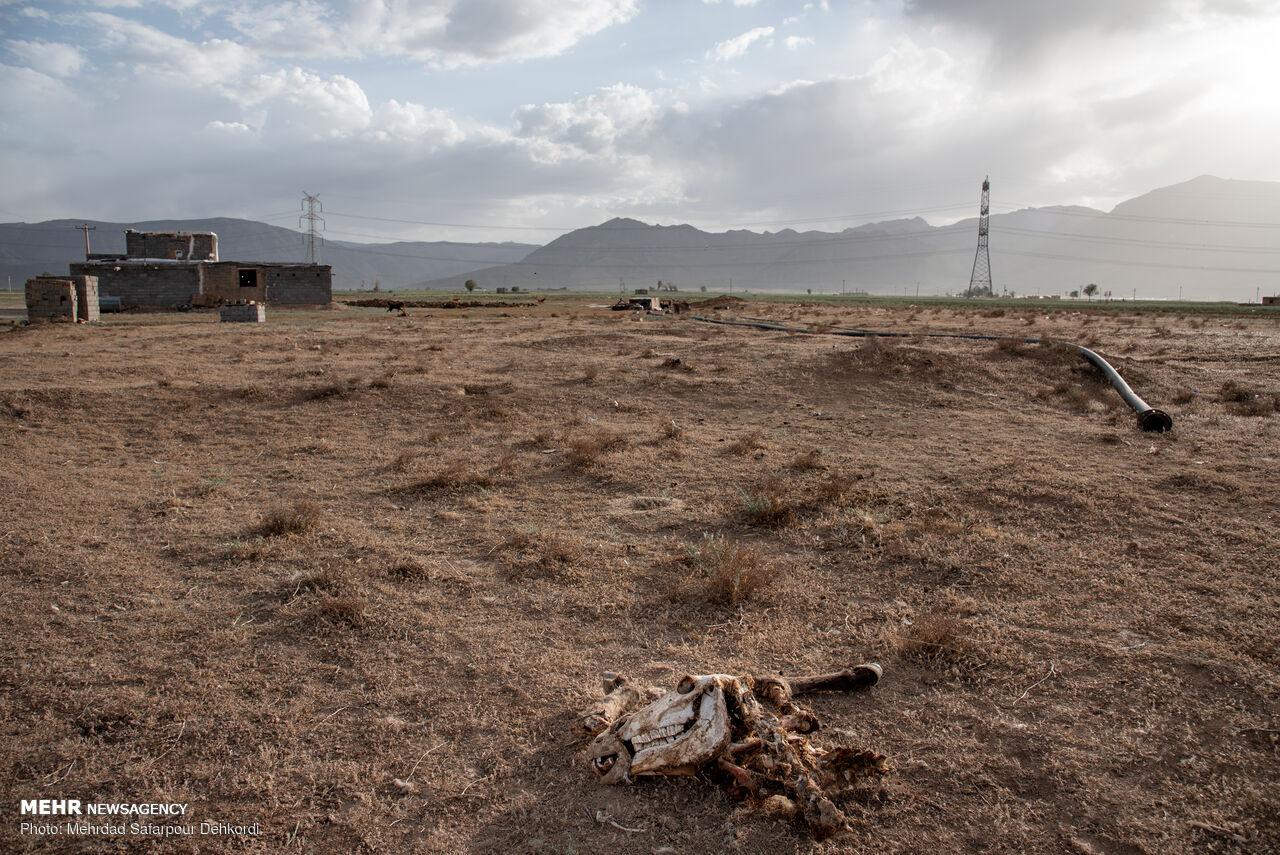 جزئیات حمایت از کشاورزان و دامداران خوزستانی اعلام شد