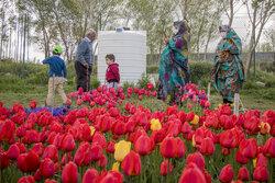 """تبریز کے """" اسپرہ خون """" گاؤں میں پھولوں کا کھیت"""