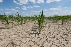 محصولات کشاورزی هرمزگان به ضایعات تبدیل میشود