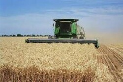 ۱.۱ میلیون تن گندم از کشاورزان خریداری شد