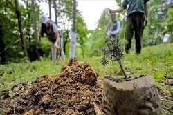 Ethiopia to plant 6bn trees as part of nationwide campaign